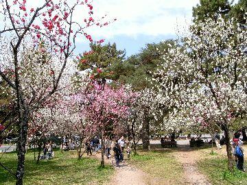 2013年3月の桃林