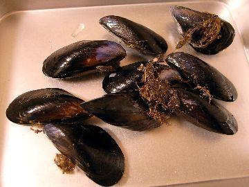 広島産ムール貝