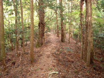 木に囲まれた道を行く