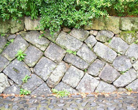 京都御苑の石垣