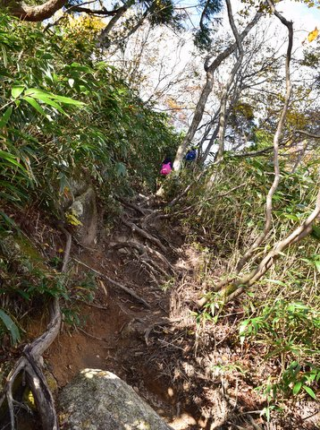 御在所岳木の根を登る