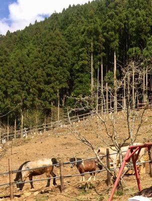 大森キャンプ場の馬