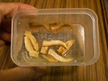 ケシロハツモドキの塩漬け