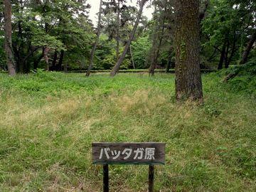 バッタガ原