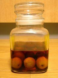京都御苑の梅酒