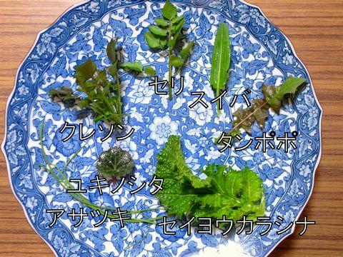 7種の野草