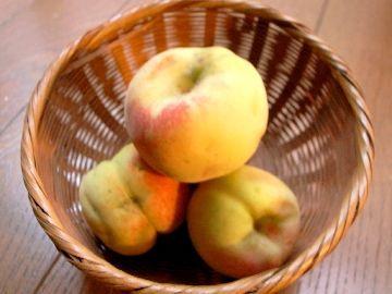収穫した花桃の実