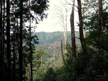 木の間から見えた景色