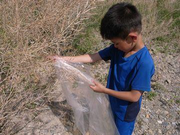 ビニール袋で収穫