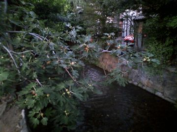 高瀬川07
