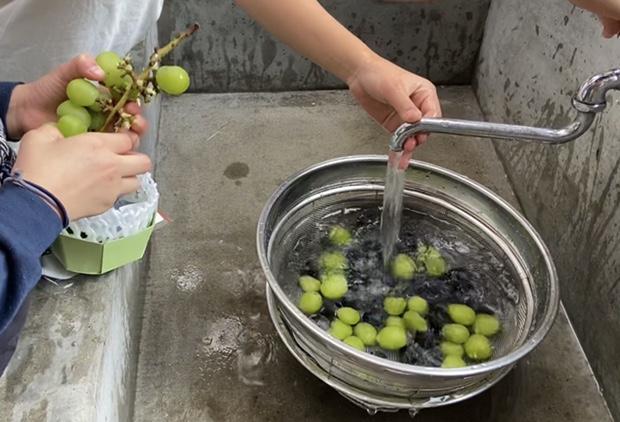 ブドウを洗う