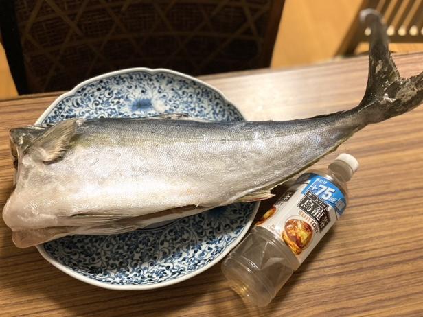 名称不明の白身魚