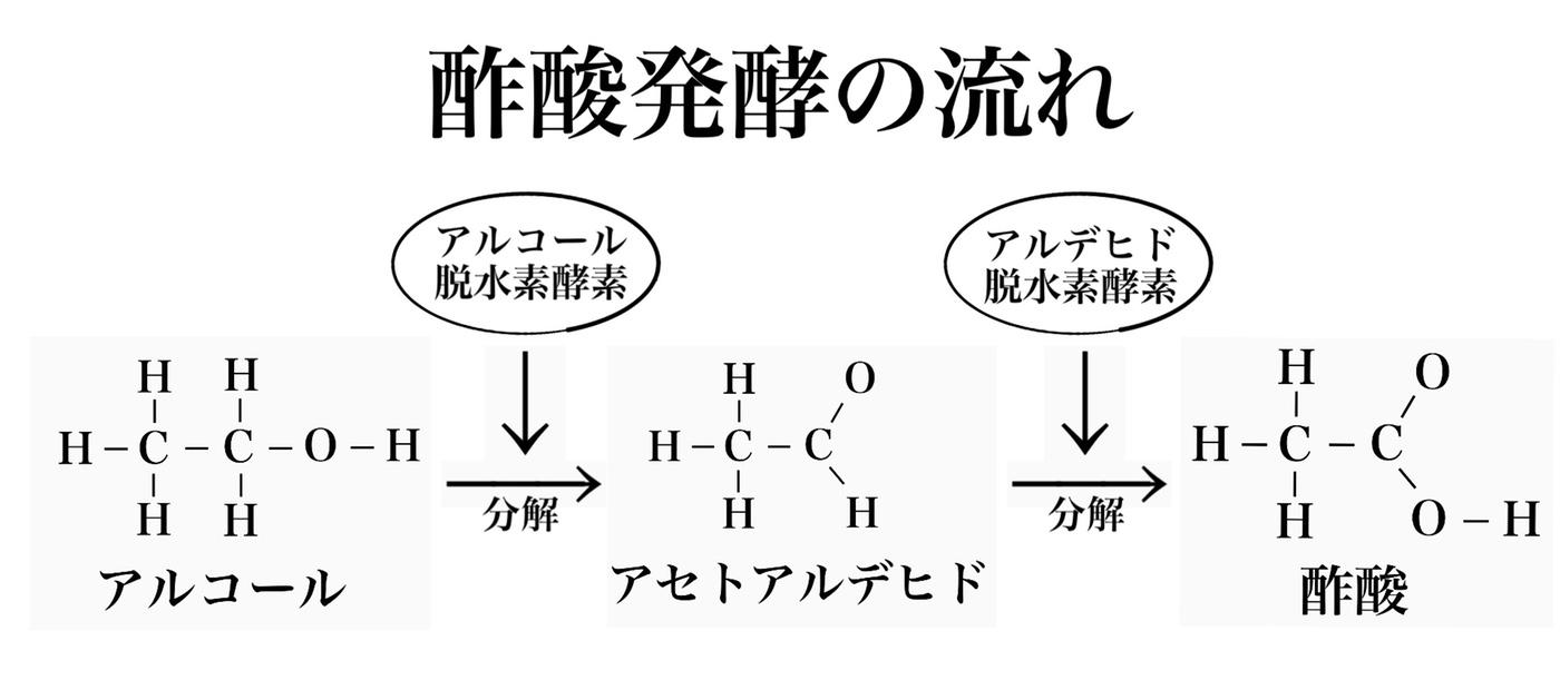 酢酸発酵の流れ