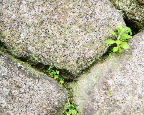 京都御苑の石垣拡大