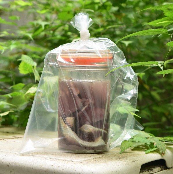 シュールストレミングを庭で発酵させる