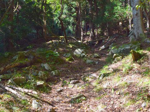 蓬莱山を目指す山道