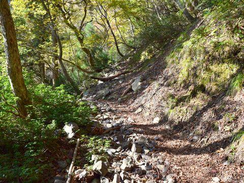雑木林の山道