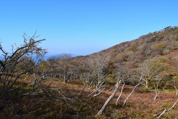 シダ植物と低木の地帯