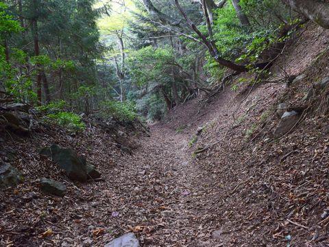 薄暗い山道を下りる