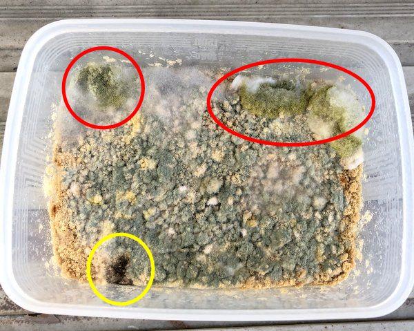 麹菌の胞子と思われる部分を丸で囲った